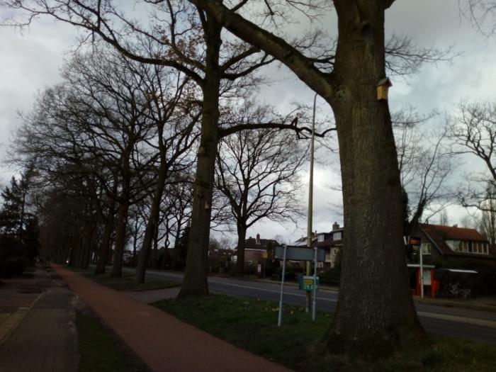 Vogelhuisjes hangen in de Eikenbomen aan de Kon. Wilhelminaweg