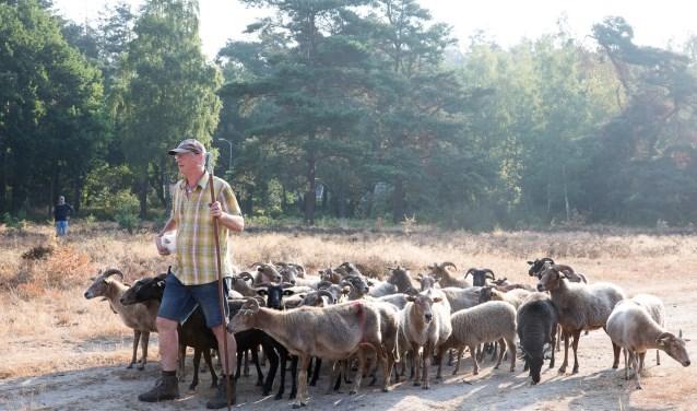 Met het hoeden van de schapen is de eerste aanzet gegeven voor versterking van de Krachtighuizerheide.