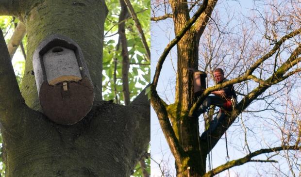 <p>Amstelveen heeft eerder nestkasten opgehangen om natuurlijke vijanden van de eikenprocessierups te lokken.</p>