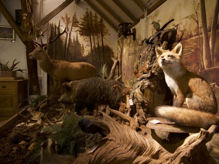 diorama in Natuurcentrum Veluwe