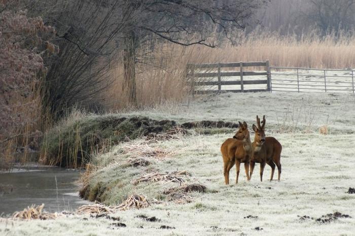 Winter in Gorinchem, reeen op de Avelingen