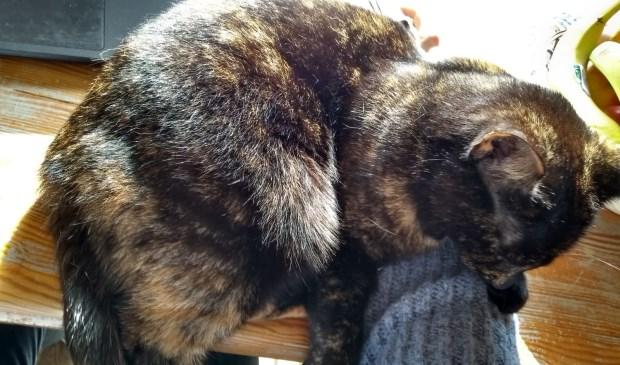 En dan gaat de kat liggen slapen op je laptop