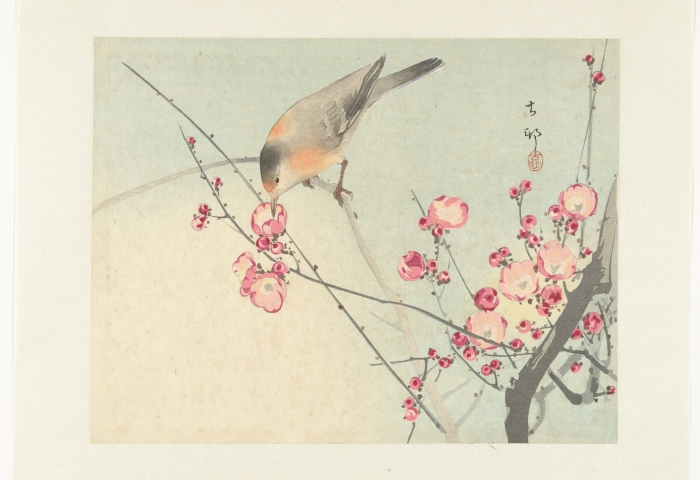 Zangvogel op bloesemtak, Ohara Koson, 1900 - 1936