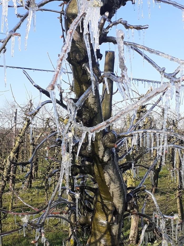 bevroren boom na beregenen Joep Duindam © BDU media