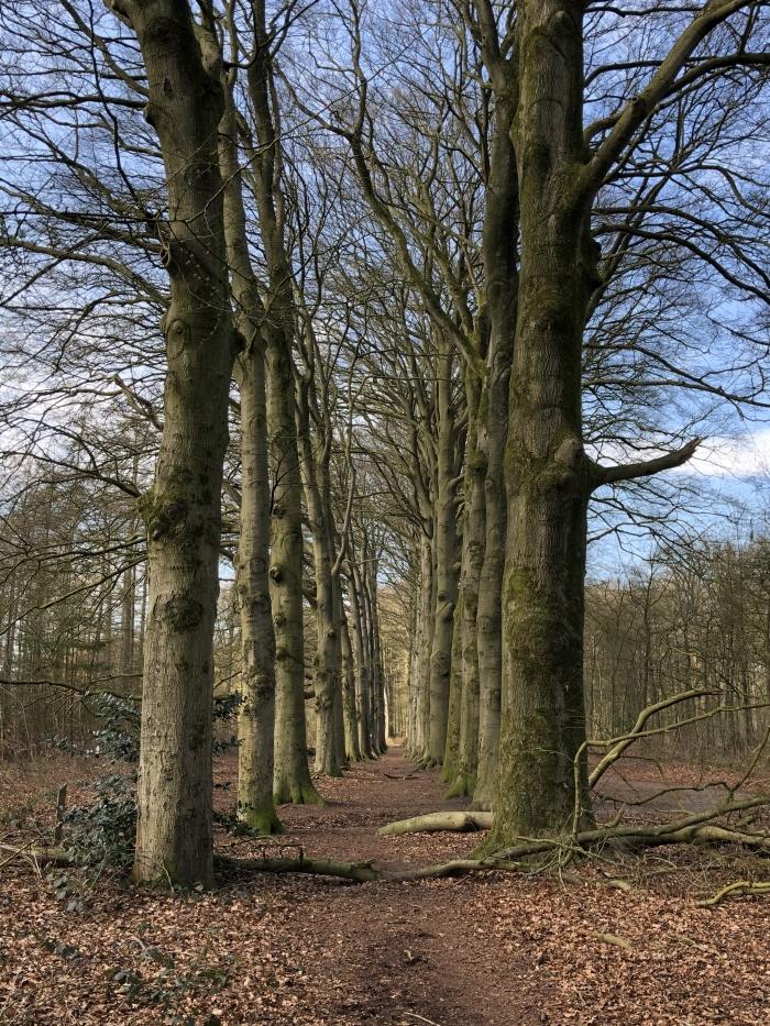 Het is rustig in het bos