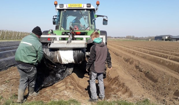 Er wordt op dit moment hard gewerkt om de asperges af te dekken Wim Oskam © BDU media