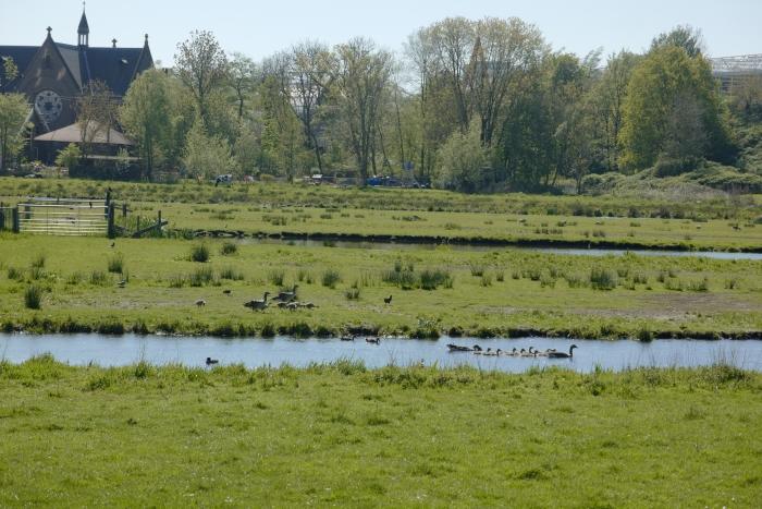 Nieuw leven in de polder