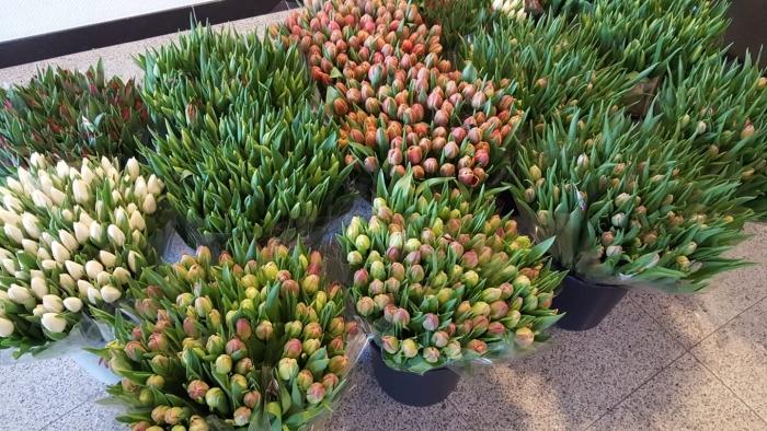 Tulpen voor de bewoners van Hof van Sliedrecht