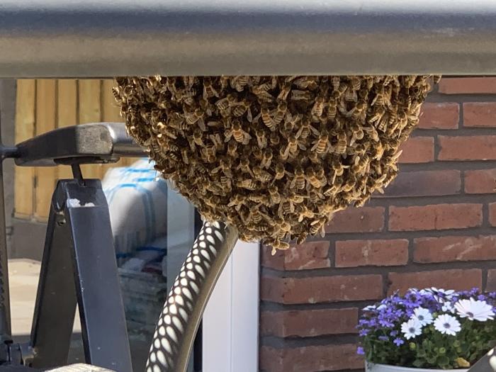 Zwerm bijen onder de tuintafel  Wietske van Vliet © BDU media