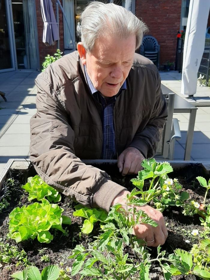 Bewoner de heer C. van der Lee aan het werk in de moestuinbak.