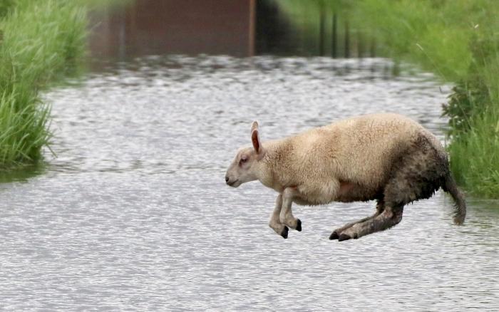 Slootje springen Wim van der Pijl © BDU media