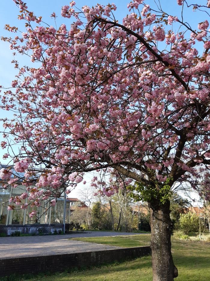 bloeiende boom Cantonspark karin van der Raad-Doornik © BDU media