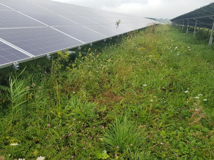 Inwoners van Wijk bij Duurstede kunnen meeprofiteren van de komst van zonnevelden