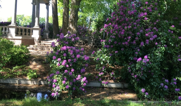 <p>Rododendrons in het Cantonspark.</p>