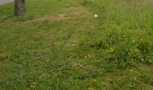 <p>Een gemaaide berm langs de Wethouder Rebellaan in Barneveld.</p>