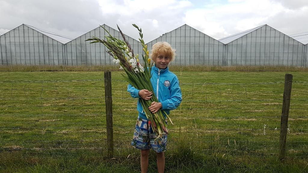 In augustus is het tijd om gladiolen te knippen. Eigen foto © BDU media