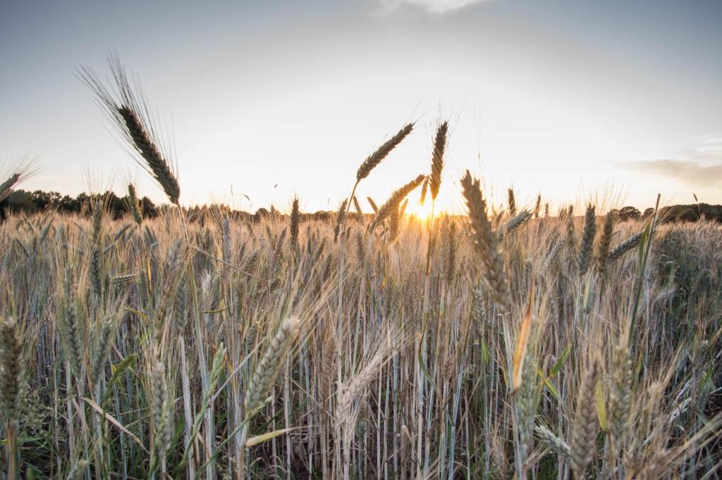Genomen aan de Woutersweg in de Doesburgerbuurt tijdens de zonsondergang. Dick Klein Geltink © BDU Media