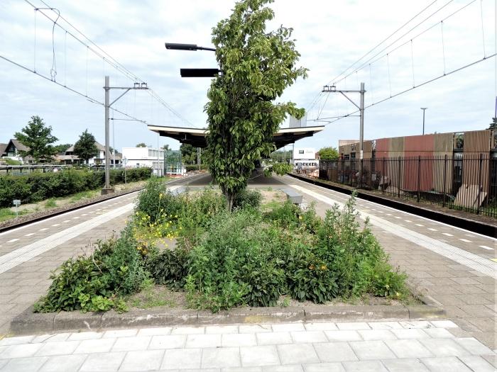 Verbouwing Hans Blomvliet © BDU media