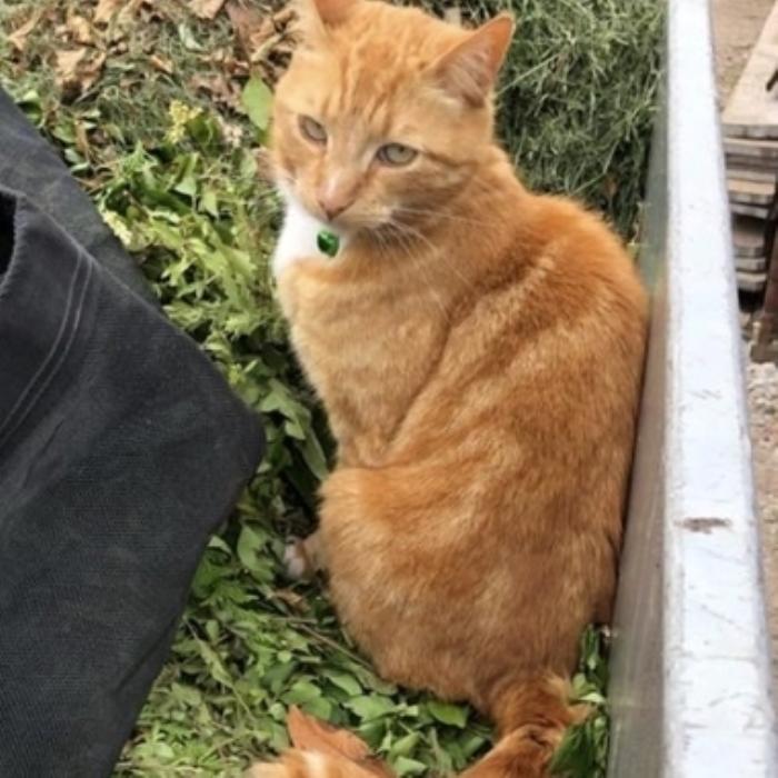 Vermiste kat er Stationsstraat Putten