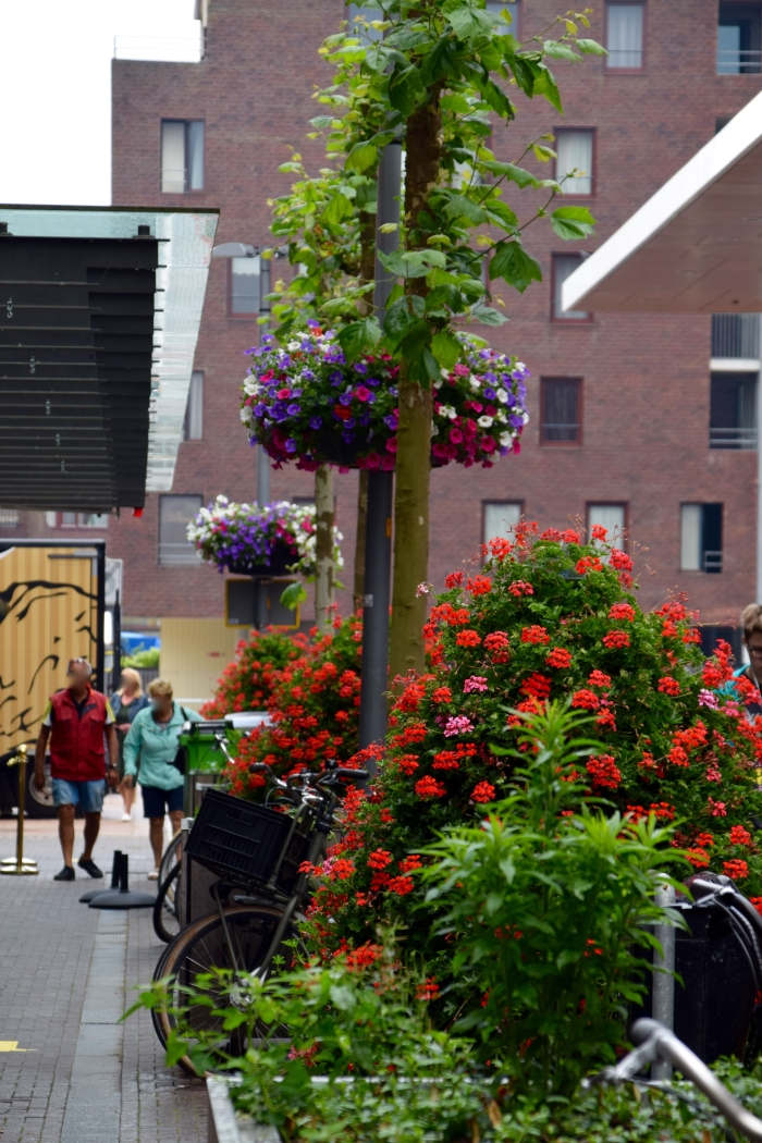Geranium torens en hanging baskets Hoofddorp Winkelstad Birgit Cramer van den Bogaart © BDU media