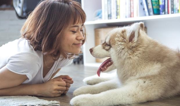 Geniet van het gezelschap van een hond