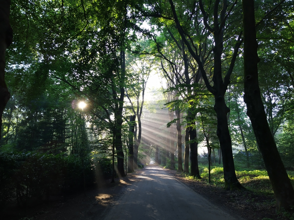 Vrijdagmorgen om 7.10 uur op de Horalaan in Bennekom. Tom Verhagen © BDU Media
