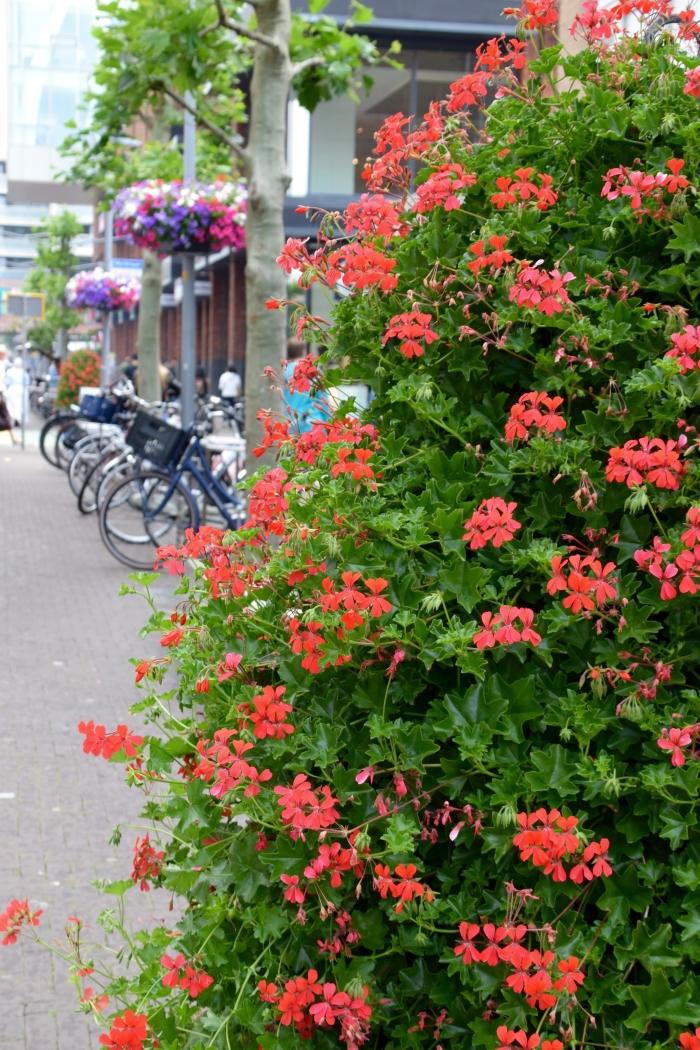 Toren van geraniums Birgit Cramer van den Bogaart © BDU media