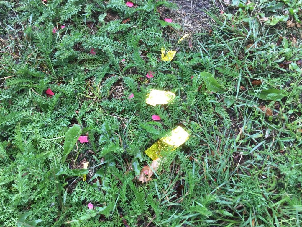 Het park lag zaterdagochtend bezaaid met glitters. Vrienden van het Cantonspark © BDU media