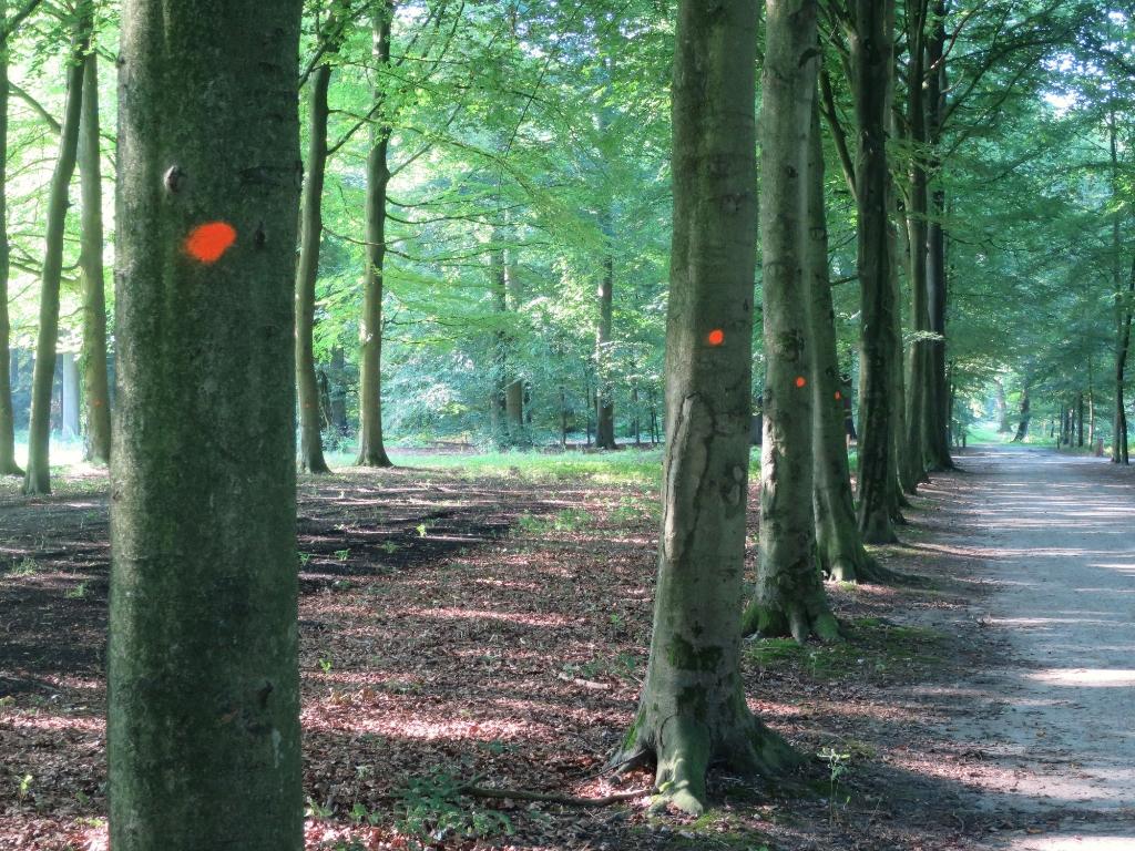 Bomen die gekapt gaan worden. Jolco Brolsma © BDU
