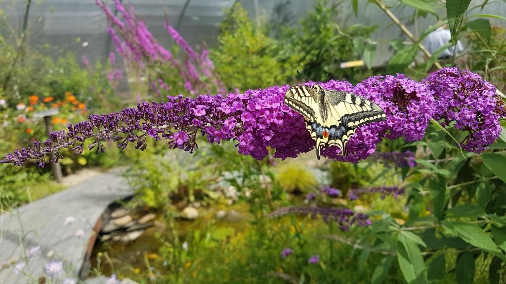 Bij de Passiflorahoeve in Harskamp. Betty Vernooij © BDU Media