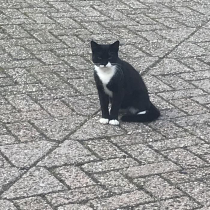 Gevonden kat Schremmersteeg Putten vinder © BDU media