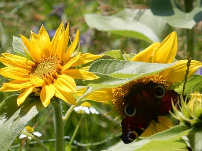 Vlinder zoek schaduw Jolanda de Graaff © BDU media