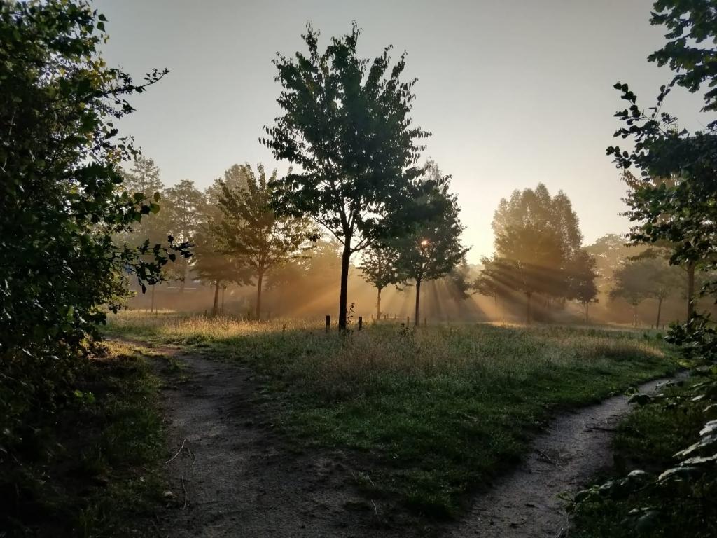 Deze foto is genomen op 19 juni om 06.15 uur in het Veldhuizerbos in Ede. Maarten Laban © BDU Media