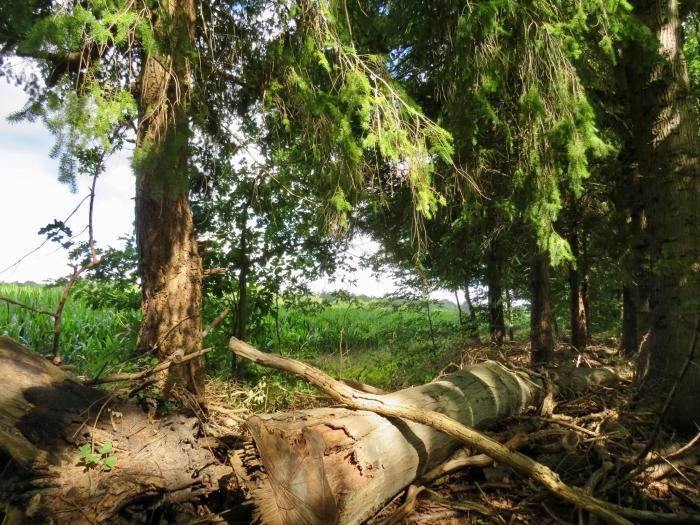 Oude bosrand aan de akkers Onno Wijchers © BDU media