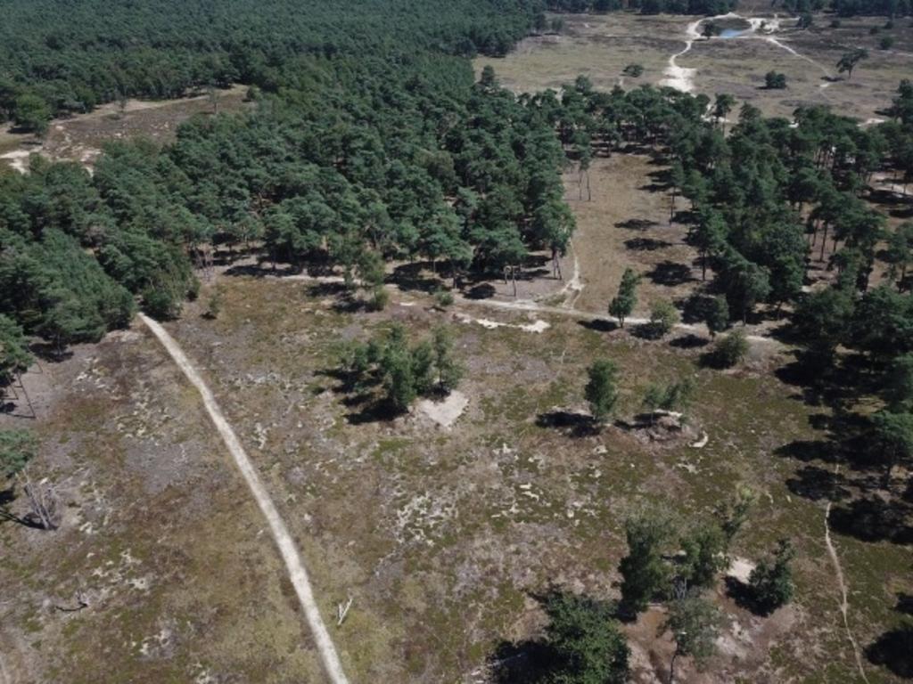 Ontwikkeling van stuifduinen en heide op Groot Heidestein. TNO © BDU media