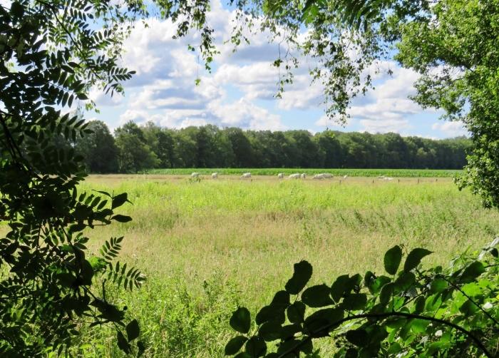 Doorkijkje vanuit de bosrand Onno Wijchers © BDU media