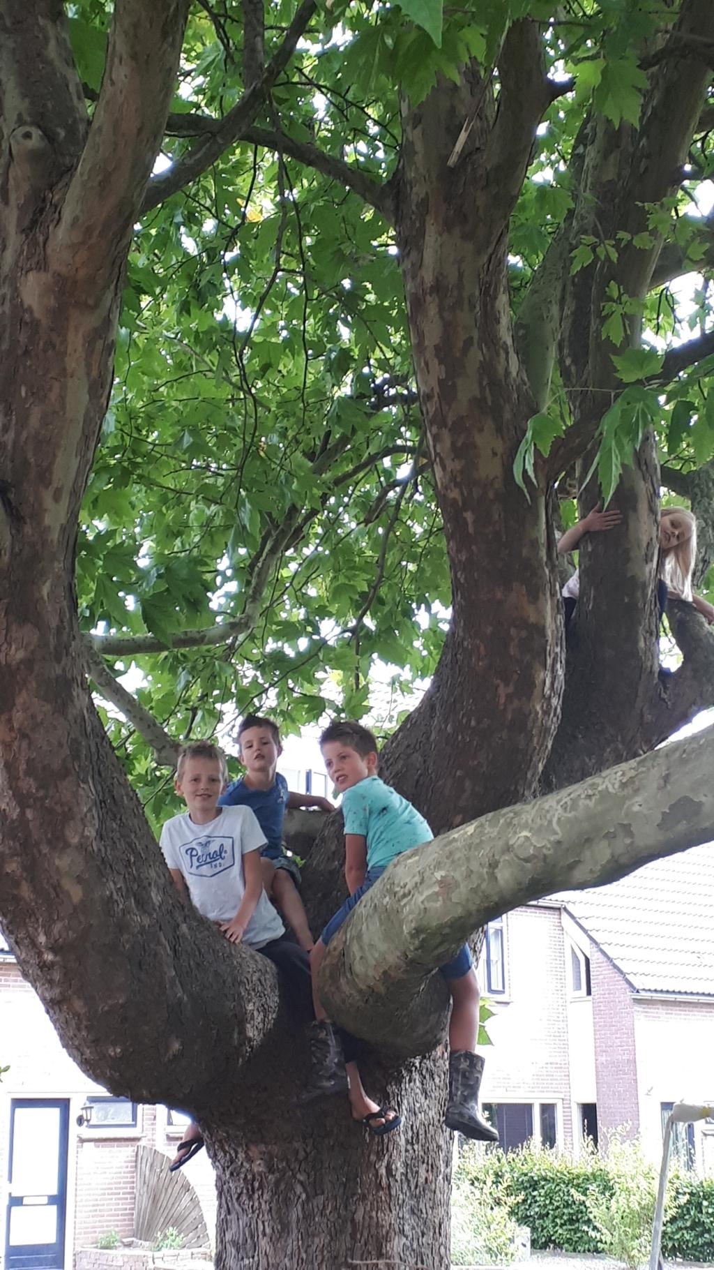 """,,Hierbij de allerleukste foto van mijn kleinkinderen, Marijn, Elieve, Thijs en Sam in de boom op de Wulpenhof."""" Marta Bakker © BDU Media"""