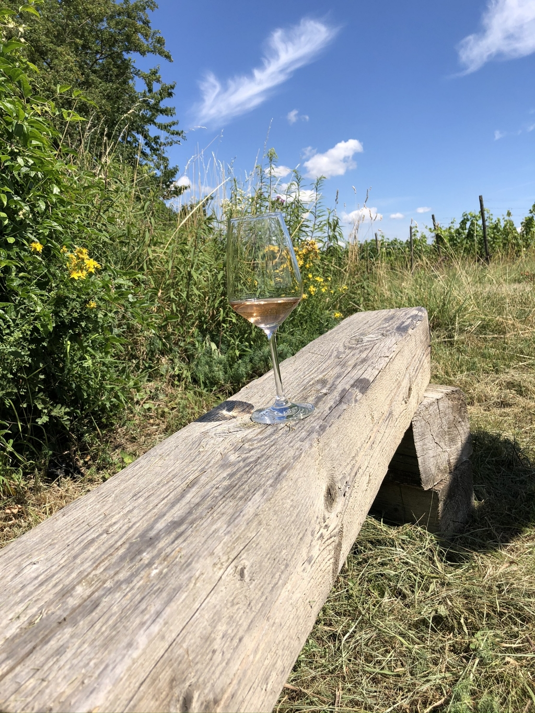 Wat is er mooier dan de wijnen te proeven in de wijngaarden waar de druiven voor de wijnen vandaan komen.  Marcel van Driel © BDU media