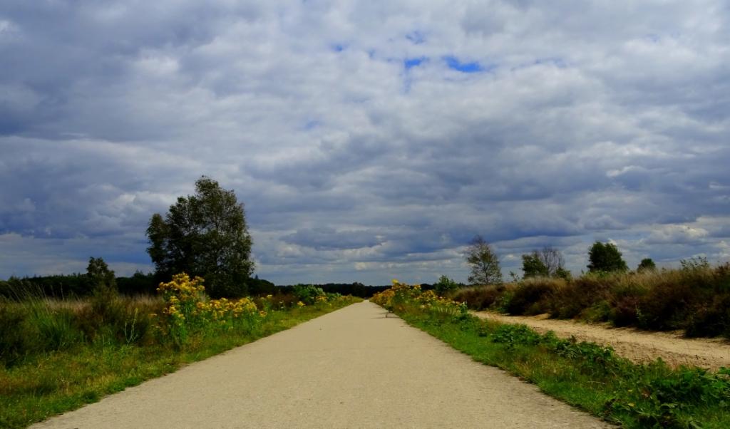 Deze foto is genomen op de Edese Heide. Dreigende luchten met veel bloemen. Yvon van der Veen © BDU Media