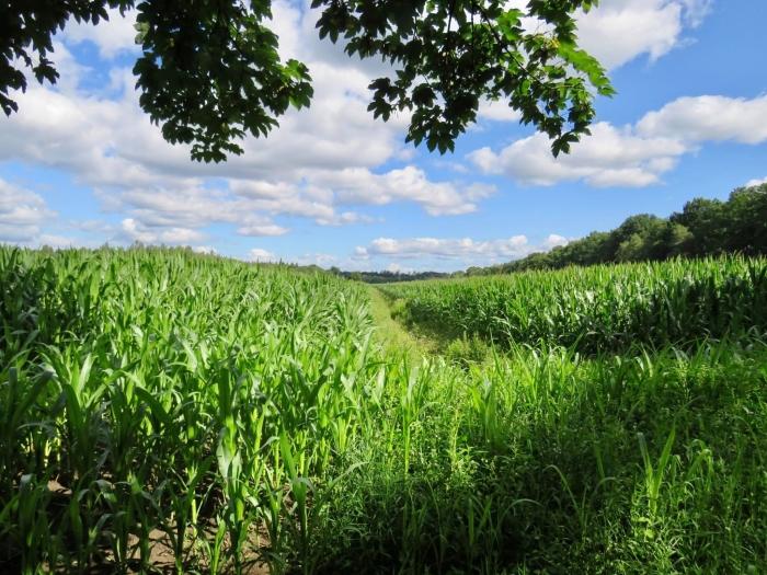 Groeizame akkers met maisvelden Onno Wijchers © BDU media