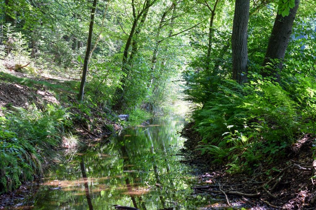 De foto is 19 juli 2020 genomen in Renkum tijdens een wandeling in het Renkums Beekdal. Zichtbaar is het mooie, schone en koude grondwater dat hier naar de oppervlakte komt en langzaam afzakt richting de Rijn. Er omheen de bomen en planten die al honderden jaren profiteren van het water.   Rutger Stoel © BDU Media