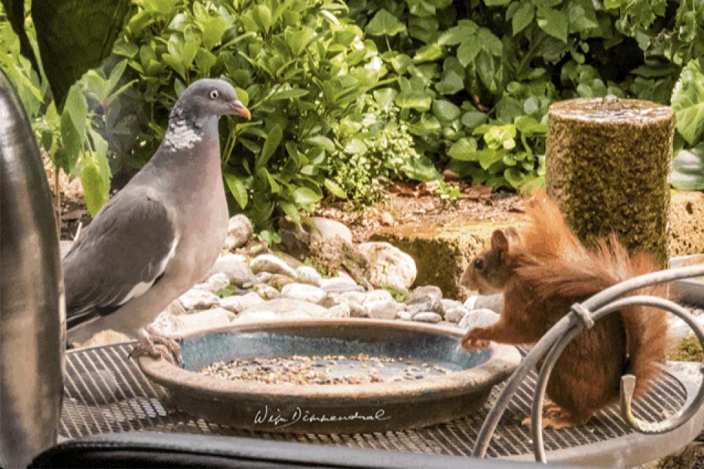 Afstand houden geldt ook aan deze tafel! Wim Dimmendaal © BDU Media