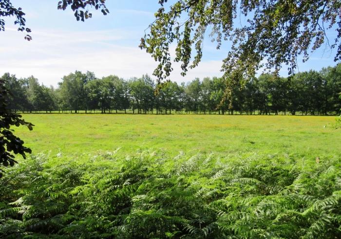Doorkijk naar Landgoed Pijnenburg Onno Wijchers © BDU media