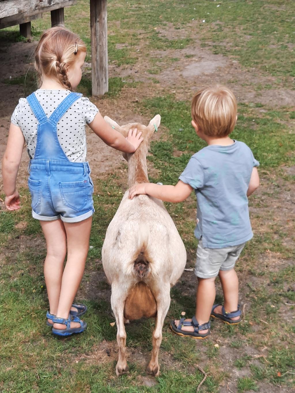 Jip van 4 en Mees van 2 op kinderboerderij de Hofstede.  Paula Hazeleger © BDU Media