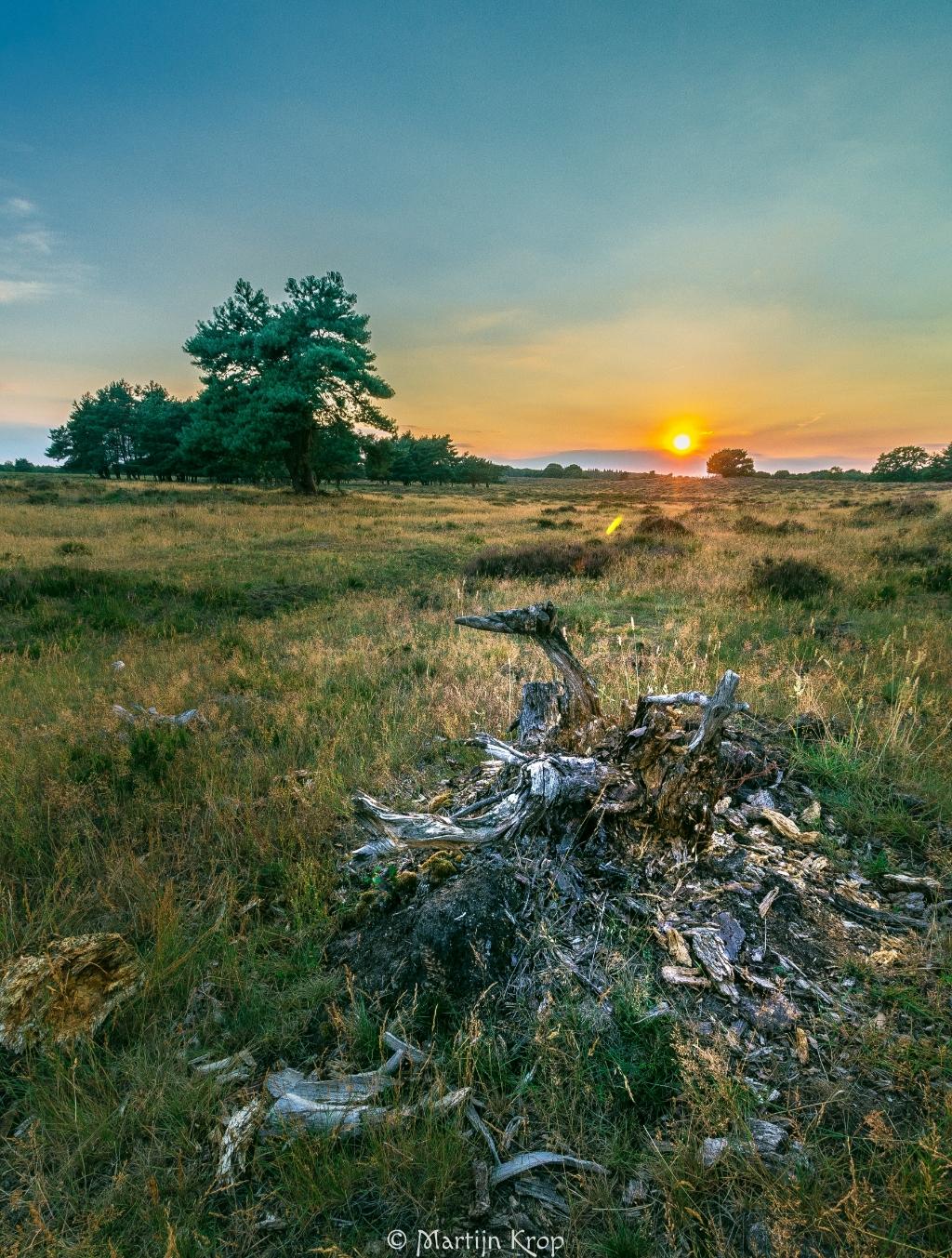 Een broeierige zomeravond, 2 augustus, op het Mosselse Veld. Martijn Krop © BDU Media