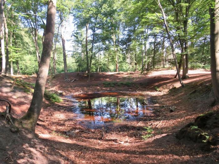 Vennetje, 'n prachtig beschutte drinkwaterbron midden in het bos