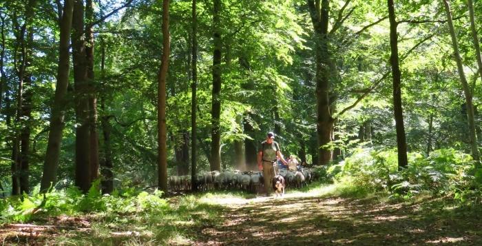 Ester en Werner hoeden de Kudde en ons, met de honden, over prachtige paden Onno Wijchers © BDU media