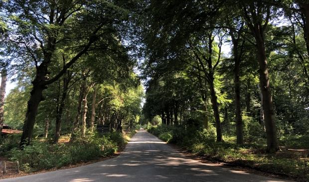 <p>Bomen aan de Broekhuizerlaan in Leersum dreigen gekapt te worden.</p>