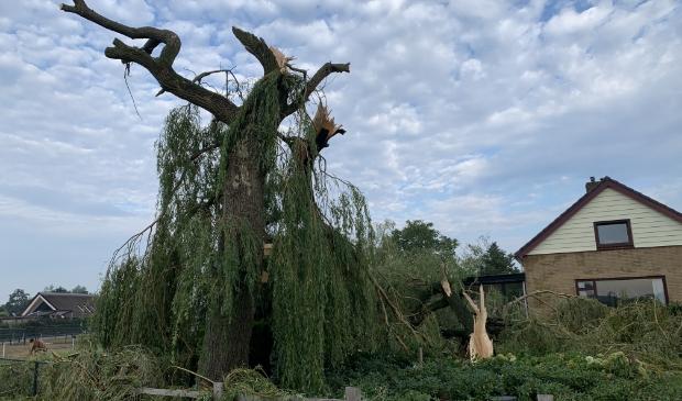 De beeldbepalende boom langs de Koningin Julianaweg.