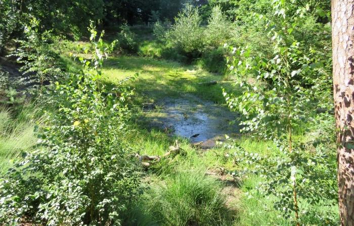 Nog een drinkwaterplek voor dieren Onno Wijchers © BDU media